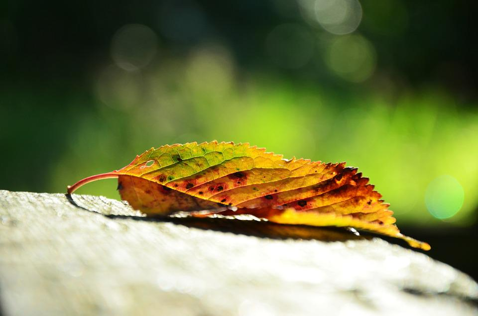 Leaf, Autumn, Colorful, Golden Autumn