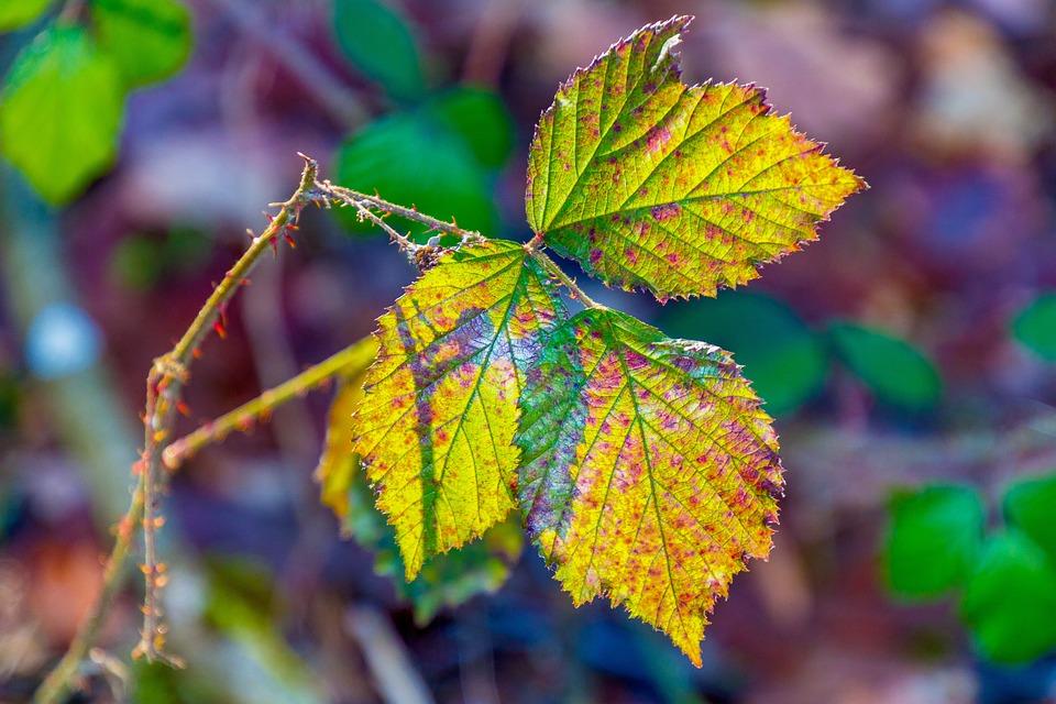 Leaf, Colorful, Nature, Fall Foliage, Fall Color, Color
