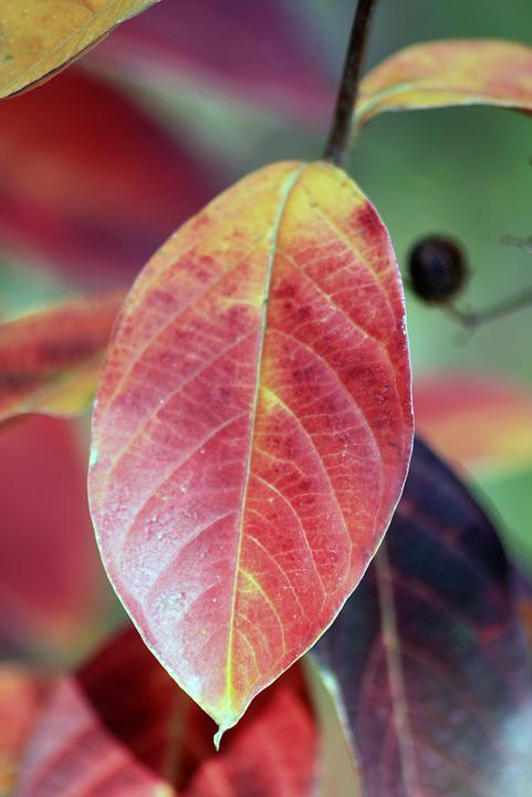 Leaf, Leaves, Fall, Nature, Autumn, Relax, Colorful