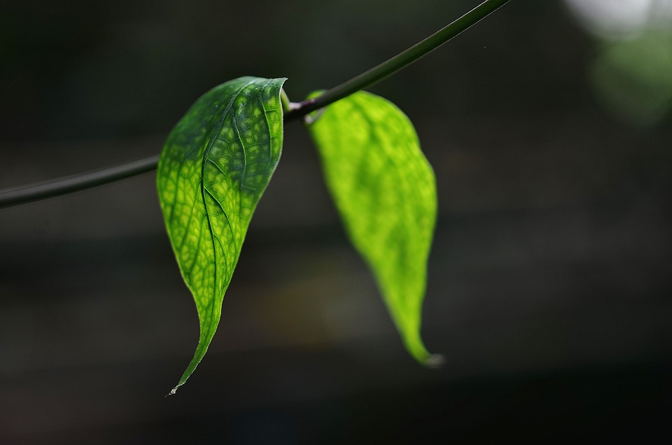 Leaf, Leaves, Colorful, Green, Macro, Nature