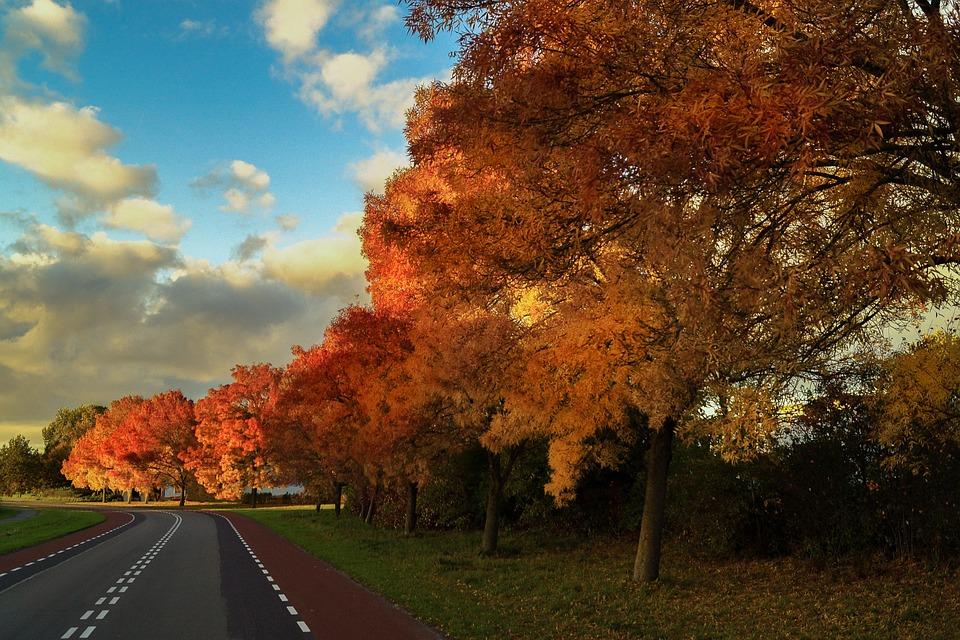 Fall, Autumn, Colorful, Season, Orange, Leaf, October