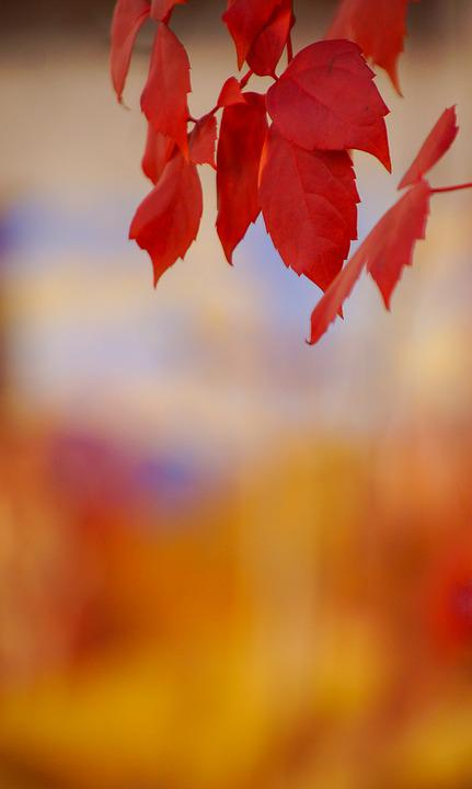 Color, Yellow, Leaves, Autumn, Gradient, Colorful