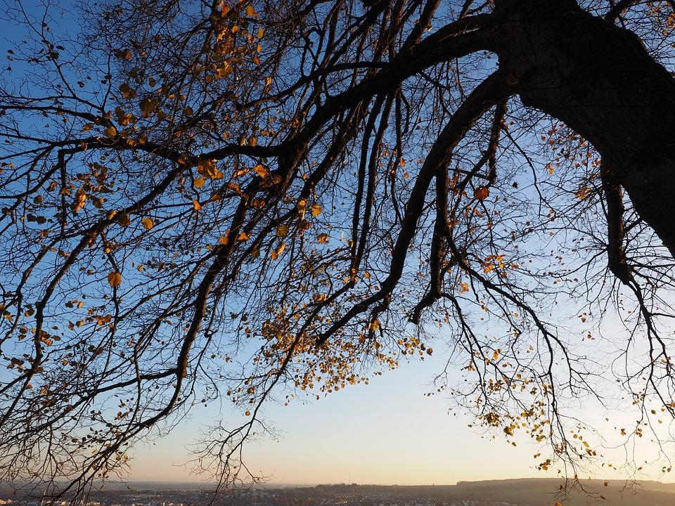 Leaves, Autumn, Tree, Log, Sunny, Colorful, Fall Color