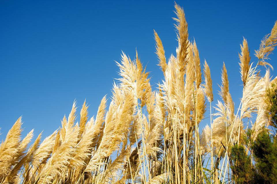 Grass, Wind, Sky, Nature, Colorful
