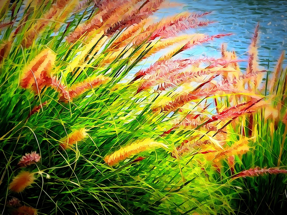 Rushes, Waterside, Plant, Colorful, Nature, Outdoor