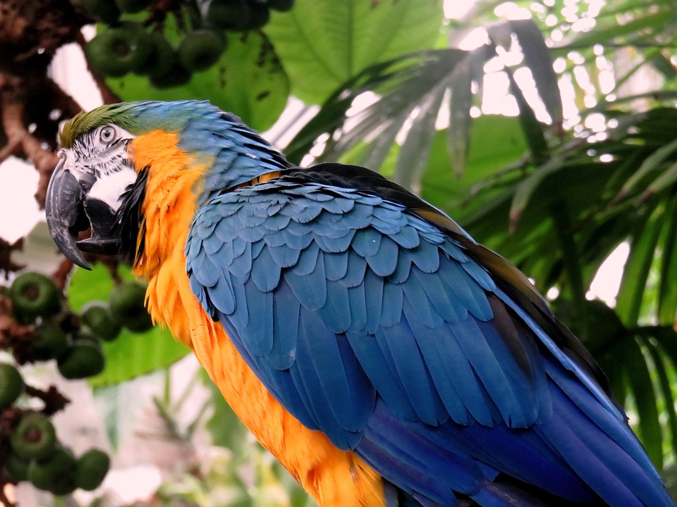 Parrot, Feathers, Colorful