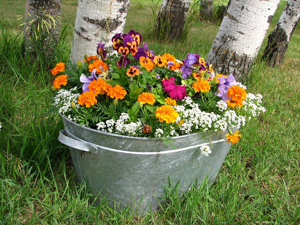 Flowers, Pot, Grow, Colorful, Bright, Garden, Spring