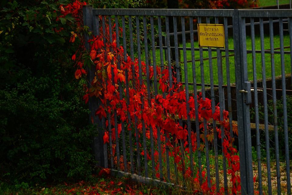 Red, Leaves, Autumn, Nature, Season, Colorful