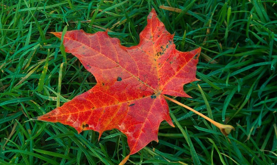 Fall Foliage, Sheet In The Autumn, Colorful
