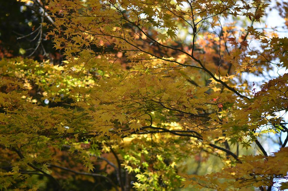 Forest, Landscape, Leaves, Colorful, Trees, Autumn