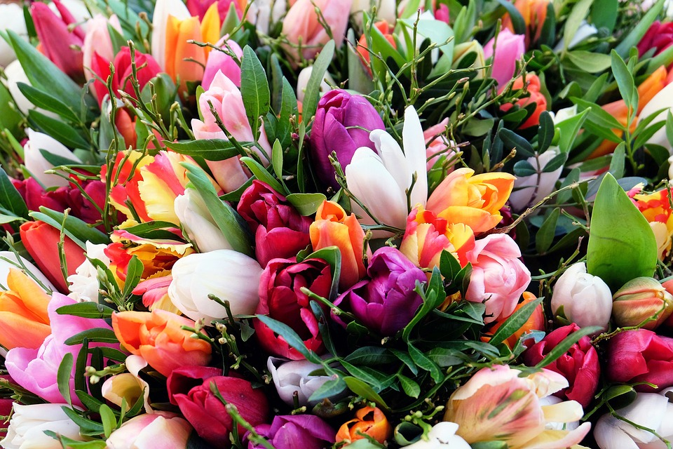 Tulips, Tulip Bouquet, Flowers, Bloom, Colorful