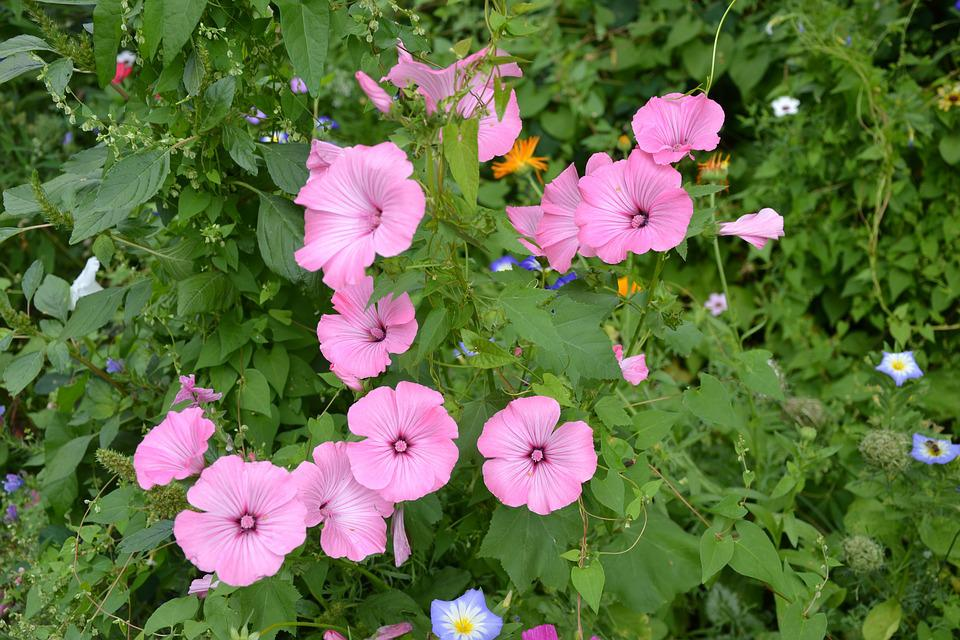Colorful Variety, Flowers, Beautiful, Diversity, Summer