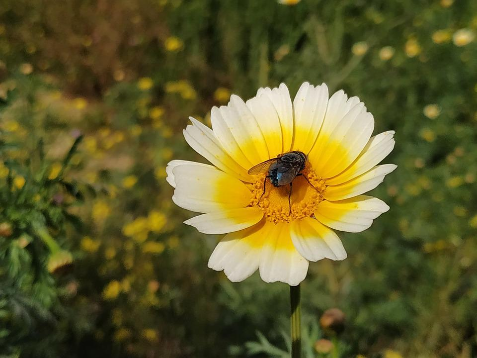 Flower, Fly, Insects, Nature, Wing, Wings, Colorful