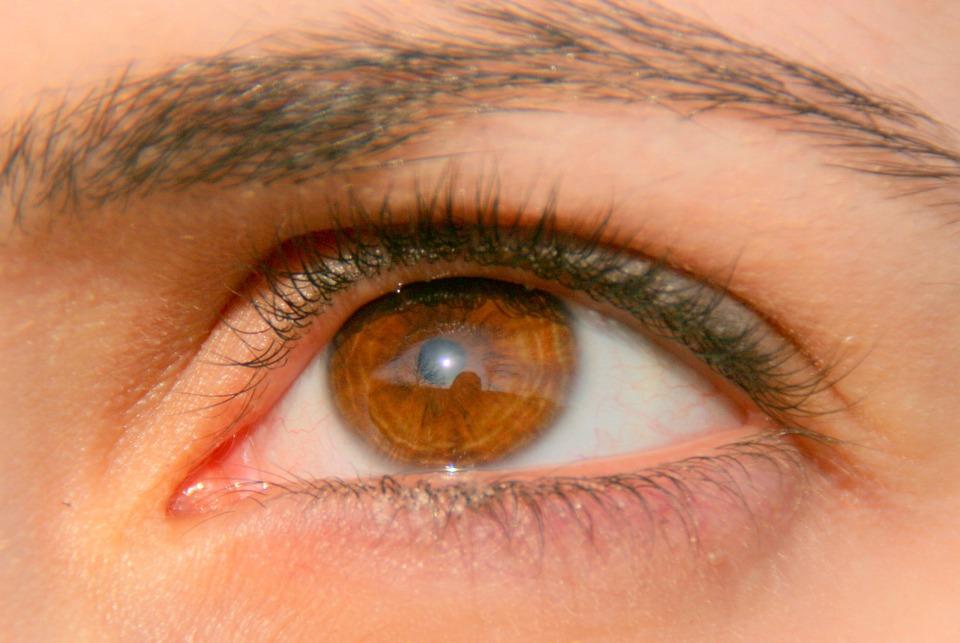 Eye, Brown, Girl, Iris, Coloring