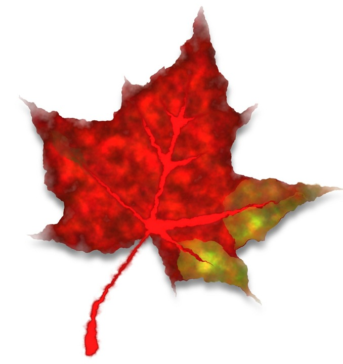 Red, Leaf, Fall, Autumn, Fall Leaves, Coloring
