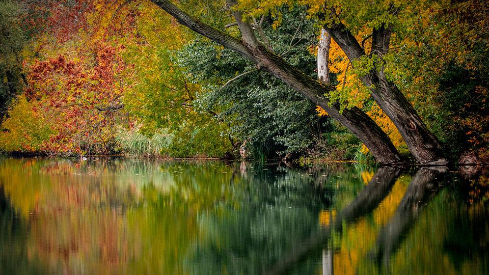 Autumn, Colors, Colored, Foliage, Nature, Autumn Leaves
