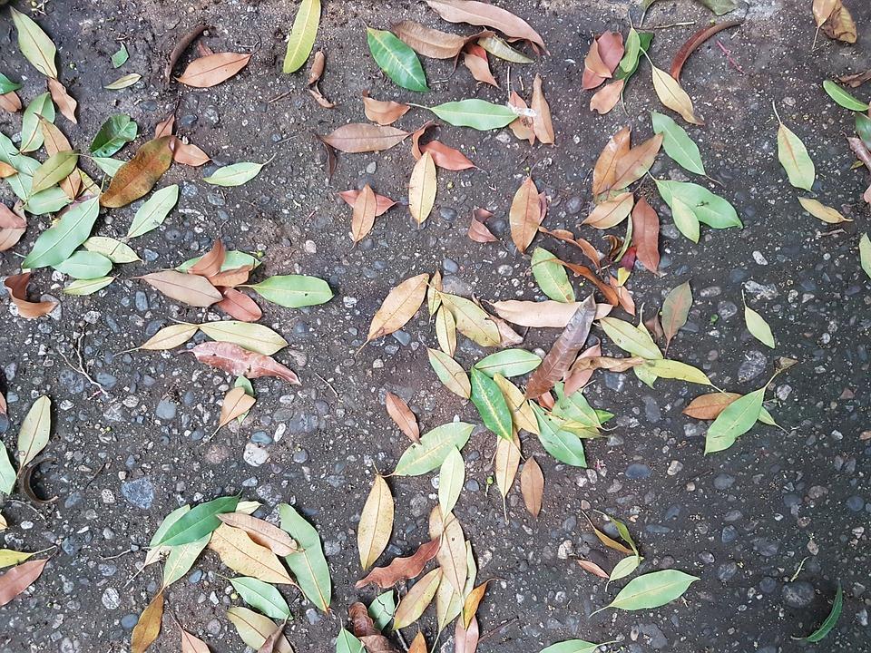 Floor, Leaves, Colors, Texture, Soledad, Autumn