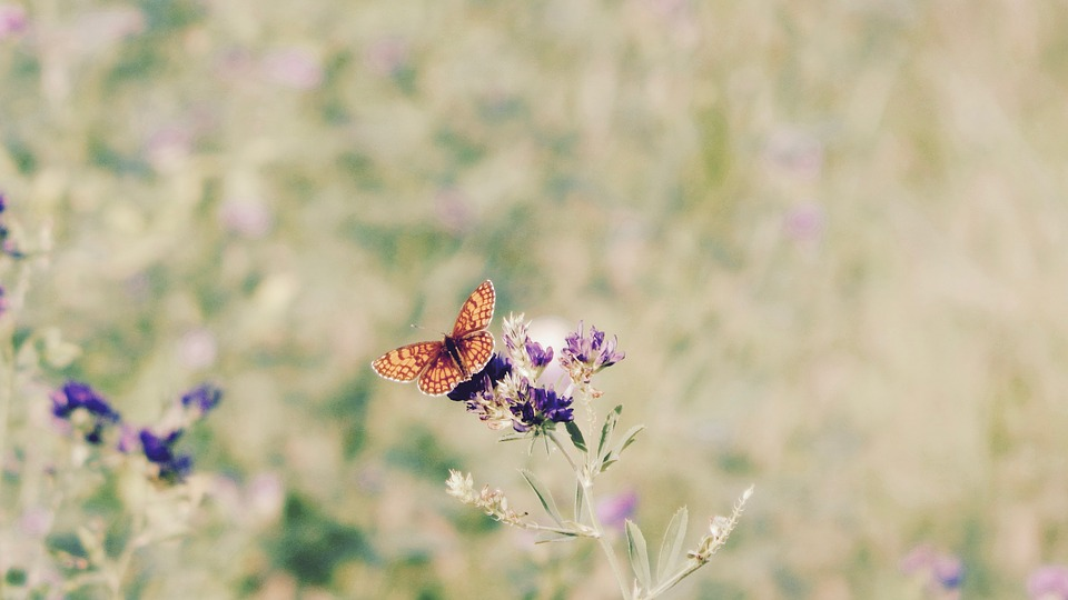 Flowers, Butterfly, Nature, Beauty, Colors, Flower