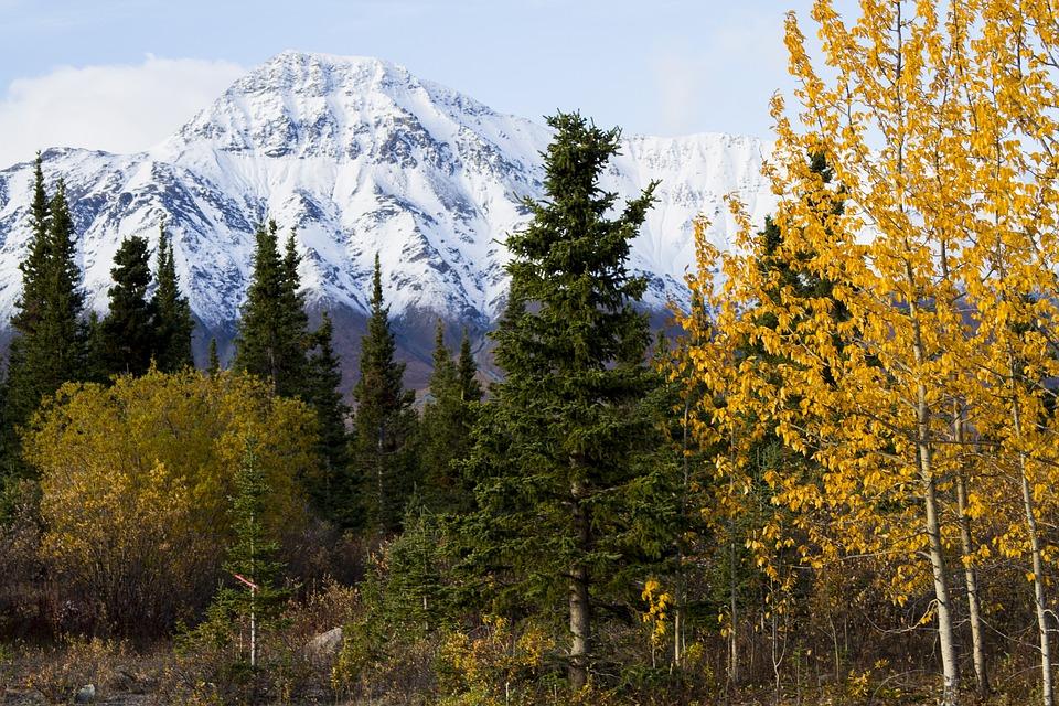 Canada, Fall, Nature, Landscape, Trees, Colors, Foliage