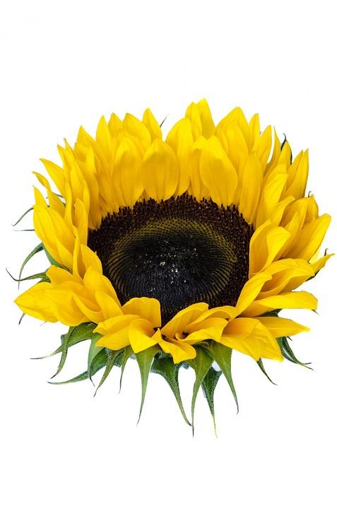 Bloom, Blossom, Bouquet, Color, Colors, Decoration