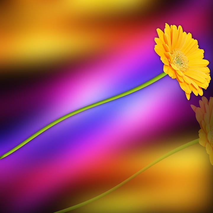 Flower, Nature, Plant, Summer, Color, Colors