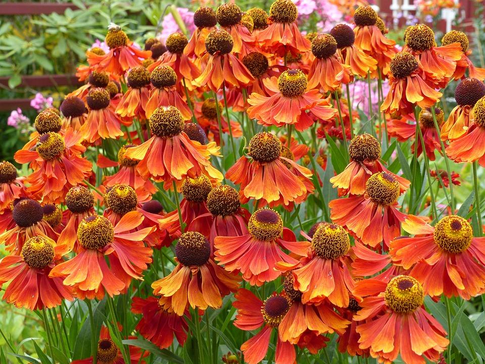 Flowers, Colors, Garden, Summer, Green