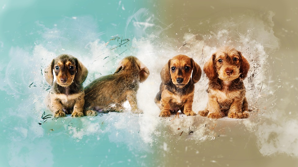 Puppies, Dogs, Paint, Colors, Grunge, Pets, Cute