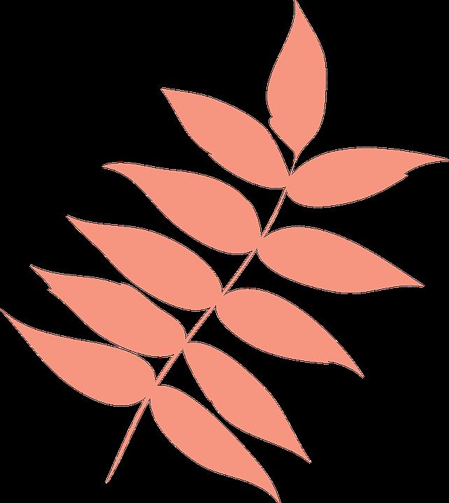 Leaf, Autumn Leaf, Dry Leaf, Leaf Ash, Icon, Colors