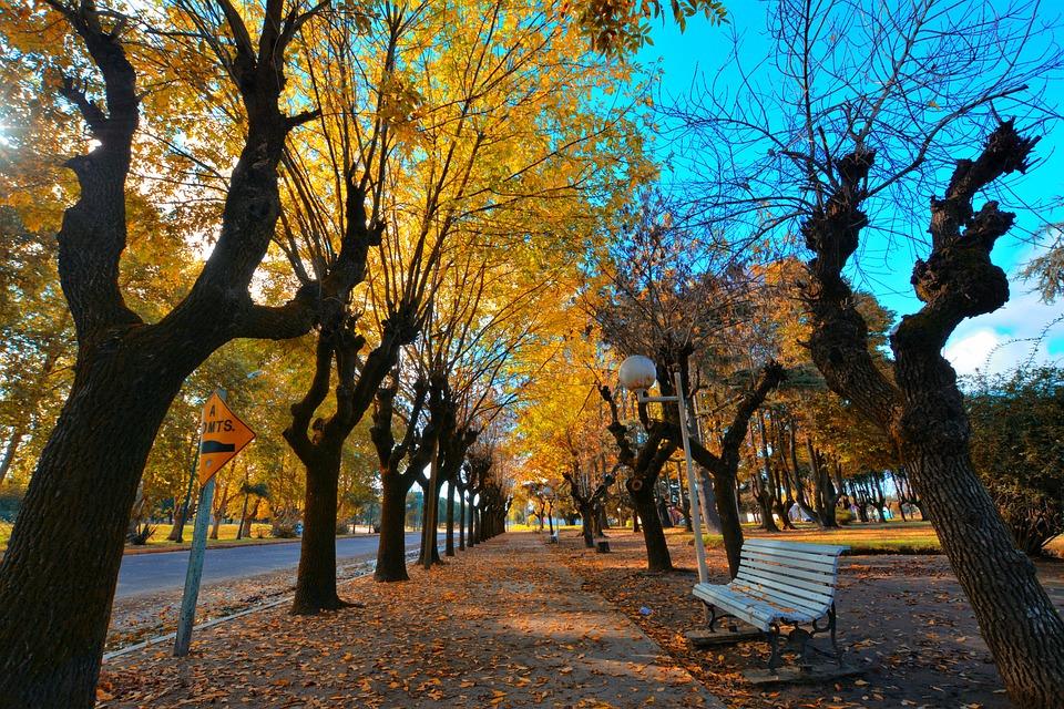 Autumn, Plaza, Colors, Park, Beautiful, Leaves, Path