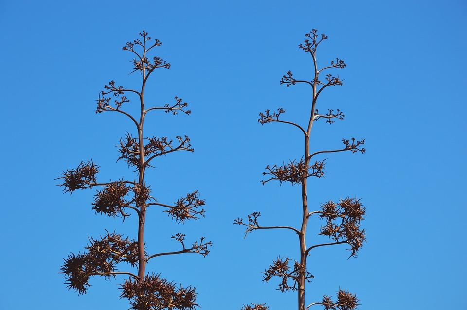 Nature, Maquis, Sardinia, Sky, Colors, Plant, Summer