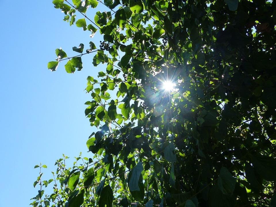 Leaves, Tree, Nature, Tree Leaf, Foliage, Green, Colors