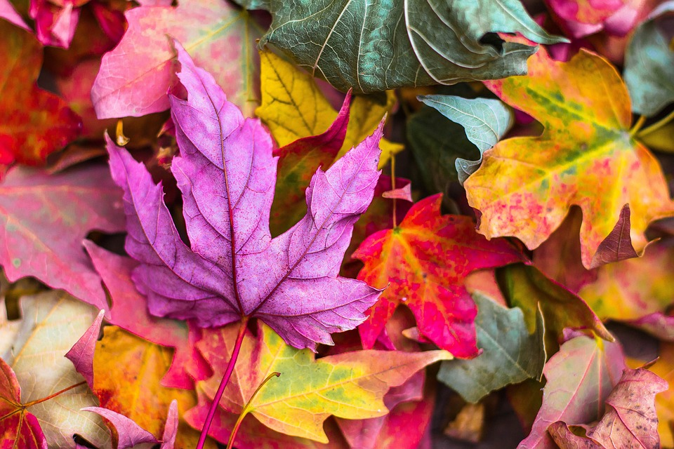 Nature, Leaves, Stems, Veins, Bold, Colors, Fall