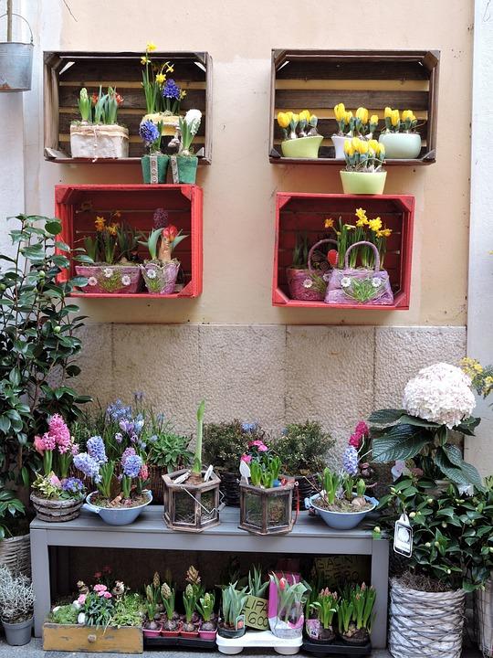 Shop, Flowers, Colorful, Colors, Tulips
