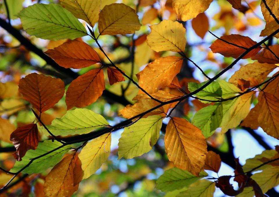 Autumn, Colors, Green, Orange, Yellow, Tree