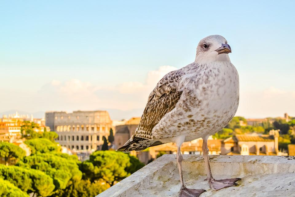 Nature, Colosseum, Ave, City, Architecture, Italy