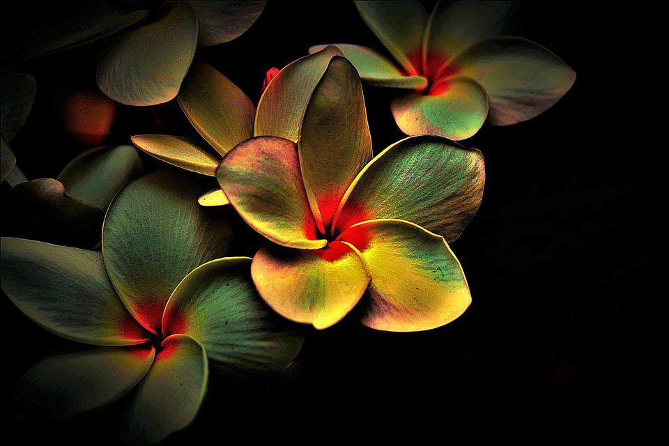 Flowers, Coloured, Abstract, Picturesque