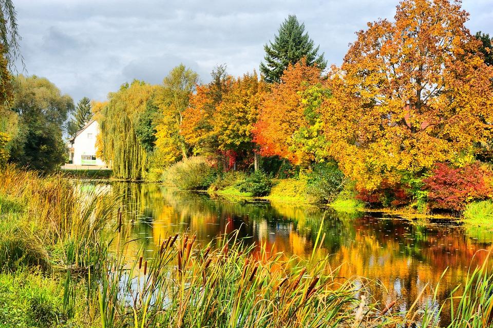 Lake In Maximilliansau, Autumn, Leave, Colourful