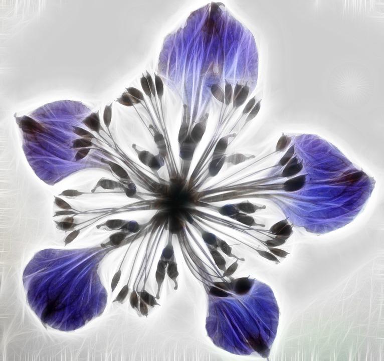 Artwork, Dry Flower, Fractal, Composing, Combine
