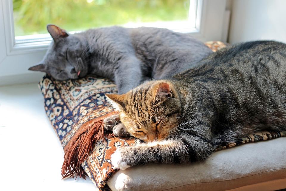 Cats, Sleep, Dream, Comfort, Animals, Home
