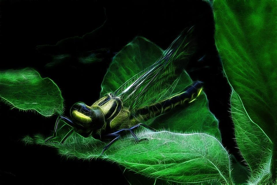 Fractalius, Dragonfly, Common Wedge Bridesmaid