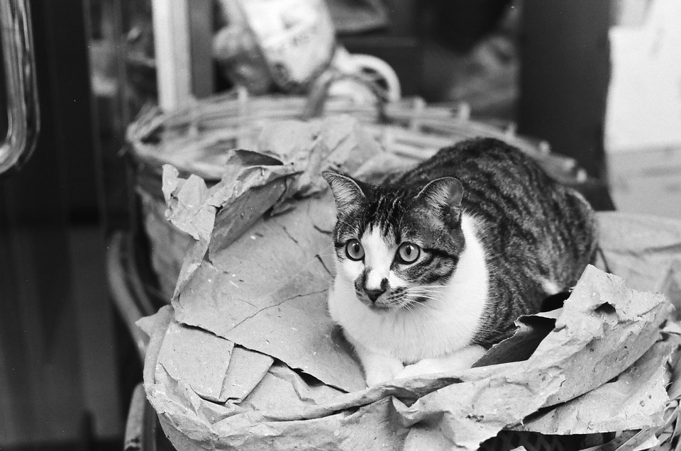Sat, Street, Compact, Cat, Black And White, Animal