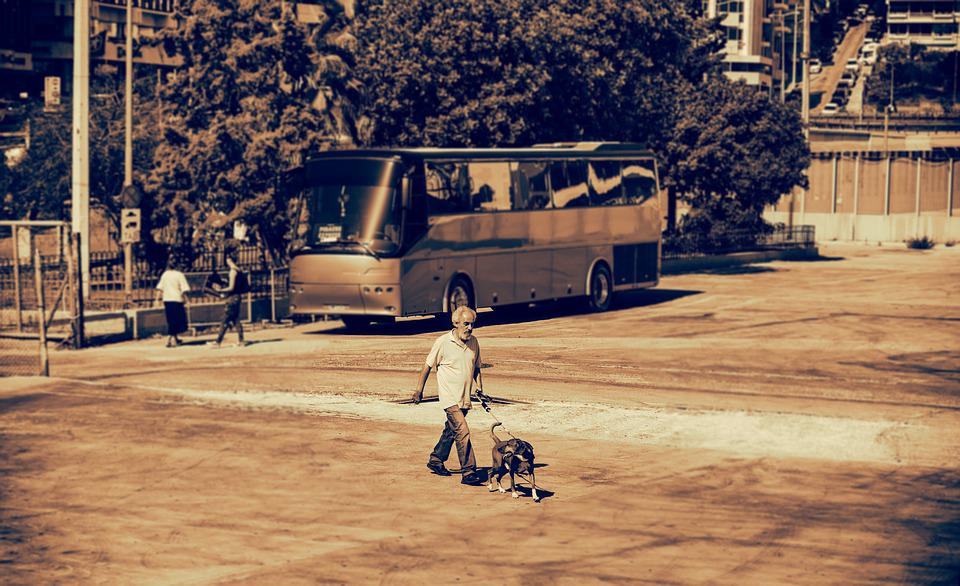 Pedestrian, Walkers, Human, Walk, Dog, Pet, Companion