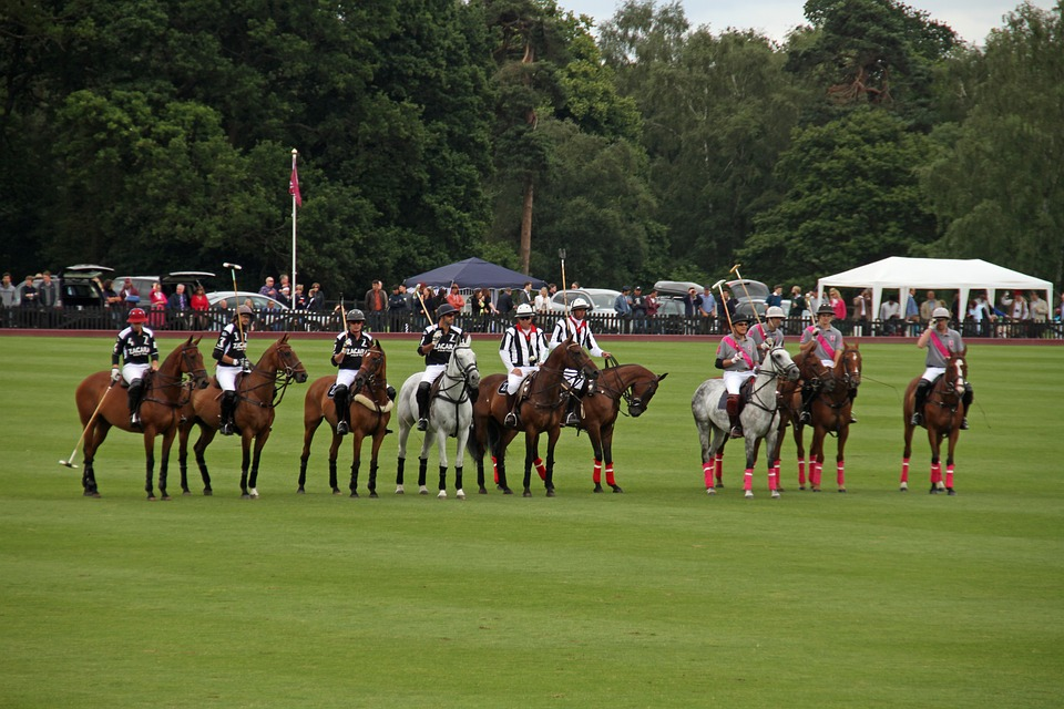 Polo, Team, Competition, Horses, Players