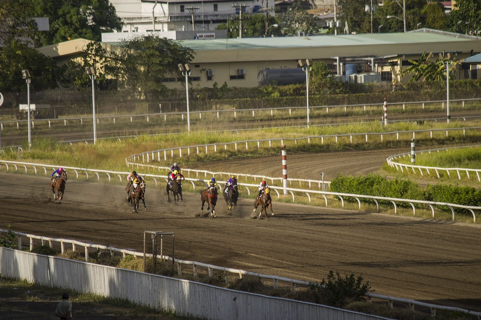 Horses, Horse Race, Competition, Racecourse, Race Horse