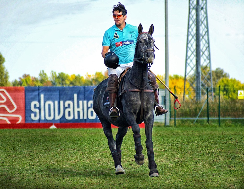 Horse Polo, Horse, Polo, Sports, Competition, Animal