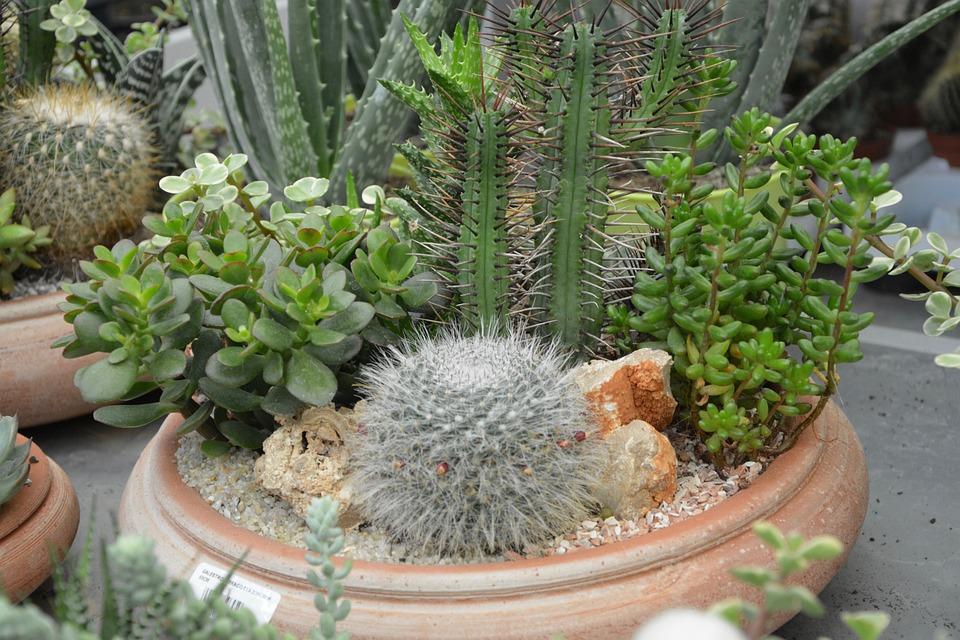 Plants Fat, Cactus, Pot, Composition, Nature