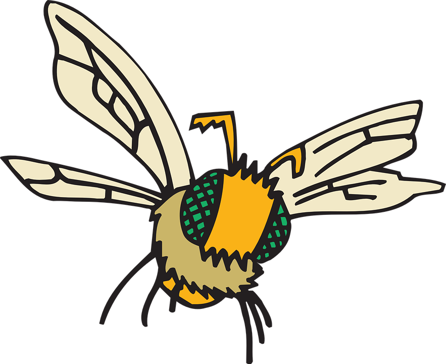 Eyes, Bee, Flying, Insect, Compound, Fuzzy, Fly