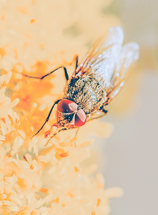 Fly, Compound Eyes, Close, Nature, Insect