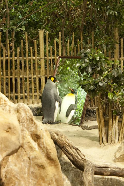 Penguin, Zoo, Conceited
