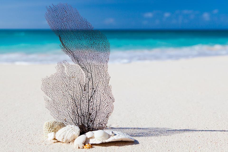 Beach, Caribbean, Blue, Beauty, Concept, Exotic, Nature